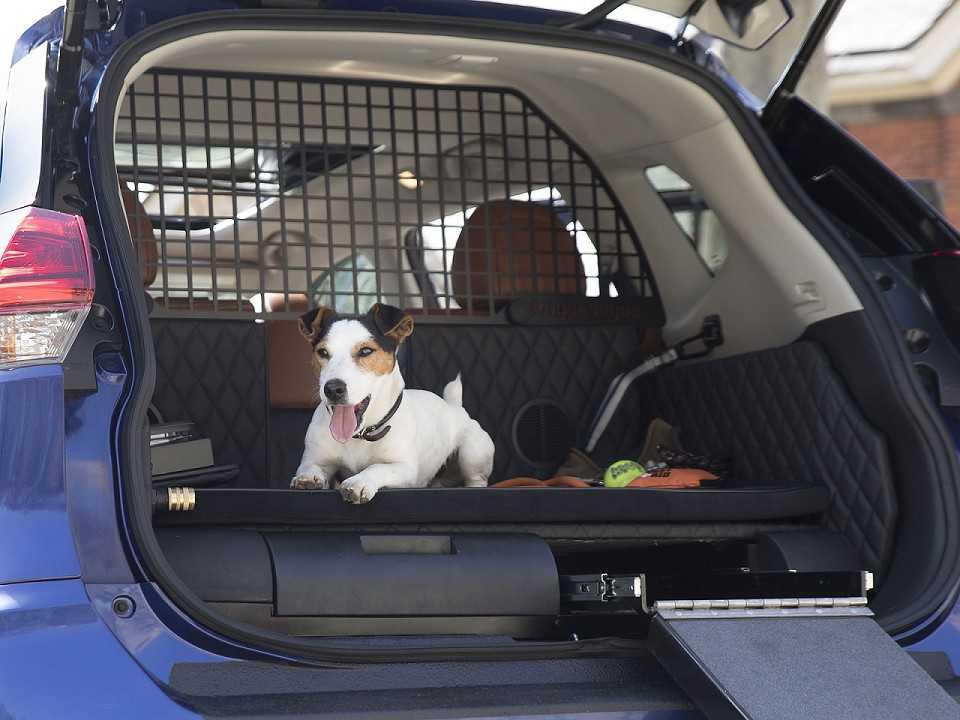 Nissan Rogue Dogue