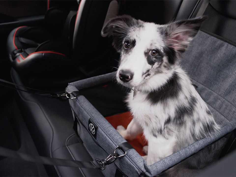Cesto de transporte para animais com cinto peitoral figura entre os acessórios para o Taos